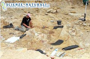 """Scoperta in Francia una nuova specie di Titanosauro: il """"dinosauro zingaro"""""""