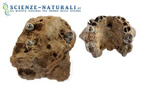 Nuovi fossili scoperti in Kenia. Altre luci sulle origini dell'evoluzione umana