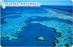 UNESCO: allarme barriere coralline
