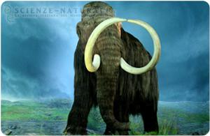 Mammut rinvenuto in Russia. Possibile una clonazione?