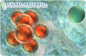 Cellule staminali per combattere l'infertilità dovuta ai trattamenti contro i tumori