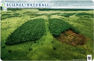Ecomafie: il traffico illegale di legname minaccia il polmone verde terrestre