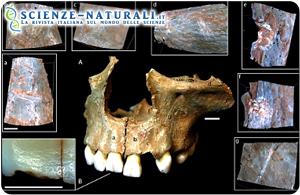 Cannibali preistorici in Europa. Bisogno o pratica rituale?