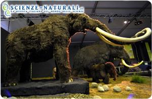 Resti di mammut in Francia, forse cibo per i Neanderthal