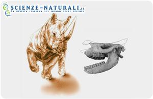 Cranio di rinoceronte conservato in ceneri vulcaniche di 9,2 milioni di anni fa