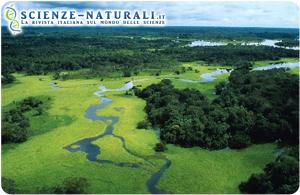 Biodiversità dei microbi in Amazzonia a rischio
