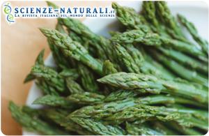 Foglie di asparagi per depurare il fegato dall'alcol