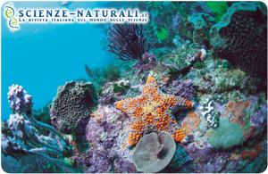 Tra le 700 specie di coralli, oltre un terzo gravemente minacciato