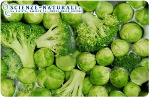 Broccoli, cavoli e cavoletti aiutano a prevenire la leucemia
