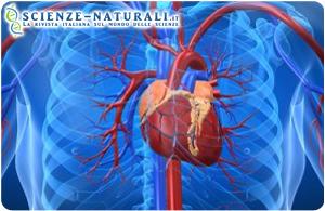 Scoperti i microRNA in grado di riparare un cuore malato