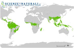 Foresta tropicale montana. Alberi che amano le nuvole
