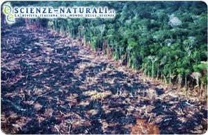 Rischio incendi in Amazzonia