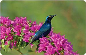 Birdwatching: una passione utile alla scienza