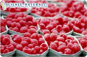Salute: i frutti di bosco prevengono l'infarto