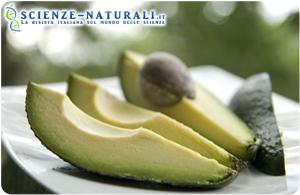 Il consumo di avocado riduce l'obesità