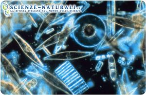 Il plancton assorbe il doppio del carbonio di quanto si presumeva