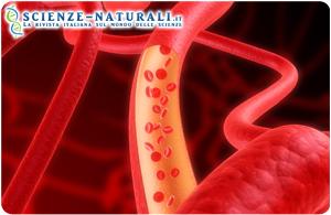 Identificato legame tra calvizie e cardiopatia coronarica