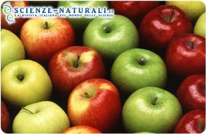 L'estratto di mela per combattere il cancro al colon