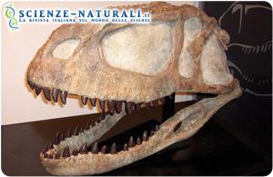 """""""Nuovi"""" dinosauri nel Madagascar: più domande che risposte"""