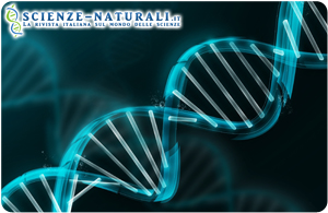 Diabete: un nuovo vaccino a base di DNA