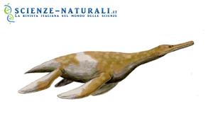 Scoperto un raro fossile di Plesiosauro del Tardo Cretaceo
