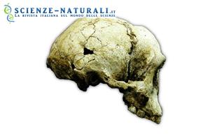 Homo floresiensis confermato specie fossile
