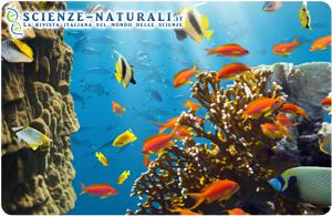 Aumento di CO2: Oceani più caldi, barriere coralline e specie a rischio