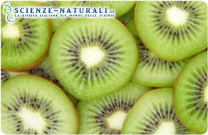 2 kiwi al giorno per ritrovare energia e buonuomore