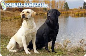Olfatto canino: nuovo protagonista nella diagnosi del tumore alle ovaie