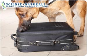 Nella comunicazione uomo-cane interviene un apparecchio radiocomandato