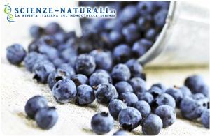 Uva rossa e mirtilli per rafforzare il sistema immunitario
