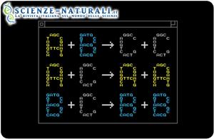 Gli ingegneri dell'Università di Washington inventano un linguaggio di programmazione per il DNA sintetico