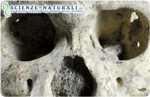 Cranio di Dmanisi riduce il numero delle specie del genere Homo ad una sola