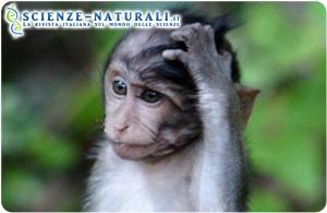 Il cervello dei primati segue un modello di sviluppo prevedibile