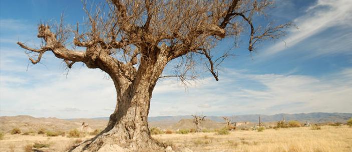 Le civiltà fioriscono o crollano in base alla qualità dei terreni locali
