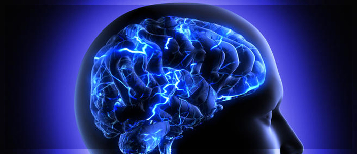 I cervelli più grandi dipendono dal corredo genetico
