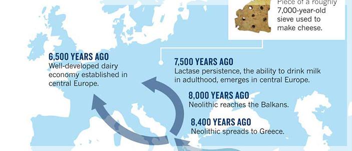 Beviamo latte da 7500 anni