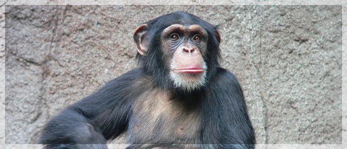 Individui alfa: il gene del dominio individuato nell'uomo