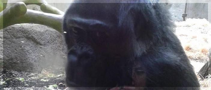 Ripensare gli zoo: cattività ed immunodepressione
