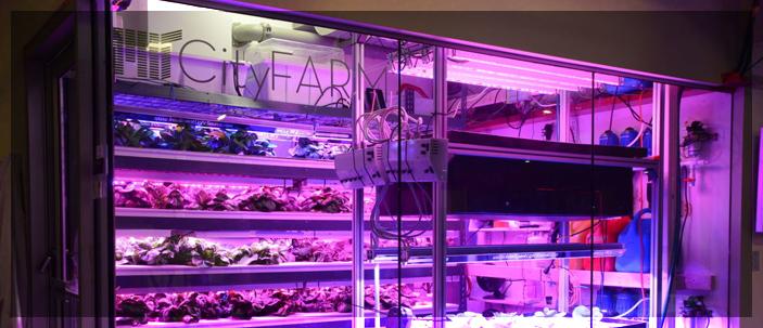 Nelle grandi città le verdure cresceranno nell'aria