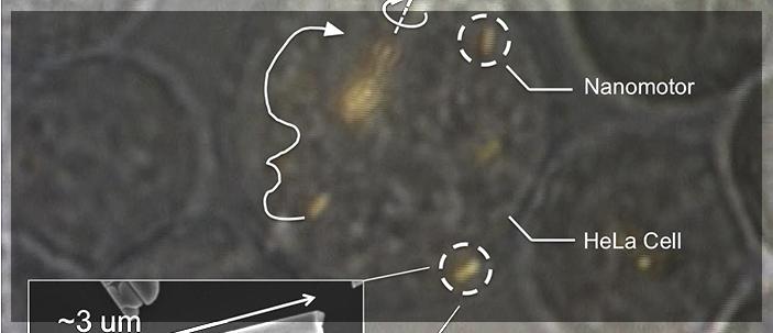 Controllati per la prima volta nano-motori all'interno di cellule viventi