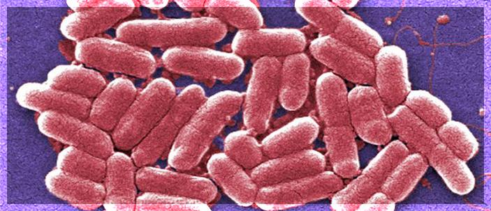 Resistenza agli antibiotici: nuovo approccio per il trattamento delle infezioni del tratto urinario