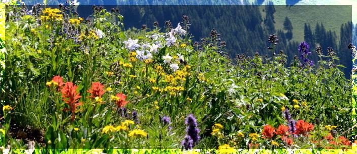 Sulle Montagne Rocciose si allunga la stagione della fioritura