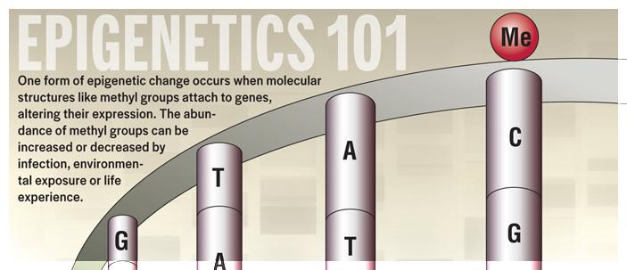 L'infanzia dei vostri antenati potrebbe essere scritta nel DNA