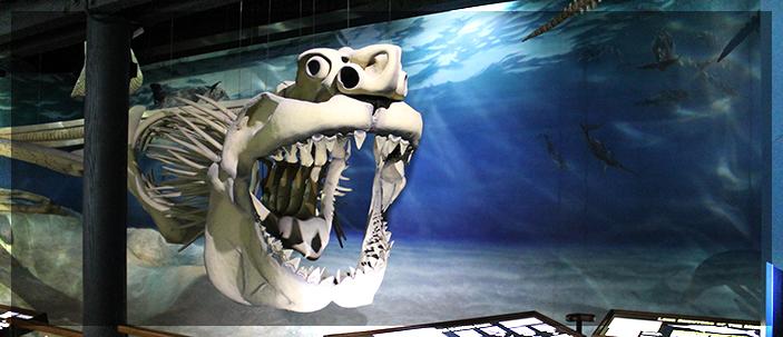 Megalodonte: il più grande squalo mai esistito