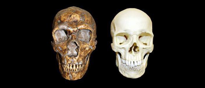 I Neanderthal non erano inferiori agli esseri umani moderni