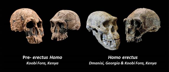 Origini umane: ambiente e adattabilità evolutiva del genere Homo