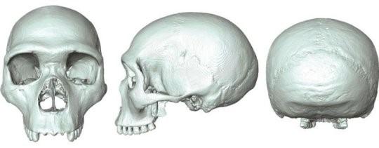 Fossile virtuale svela l'aspetto dell'antenato comune tra umani e Neanderthal