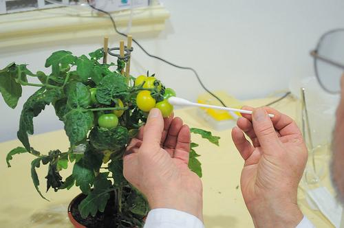 OGM: i Nobel contro Greenpeace