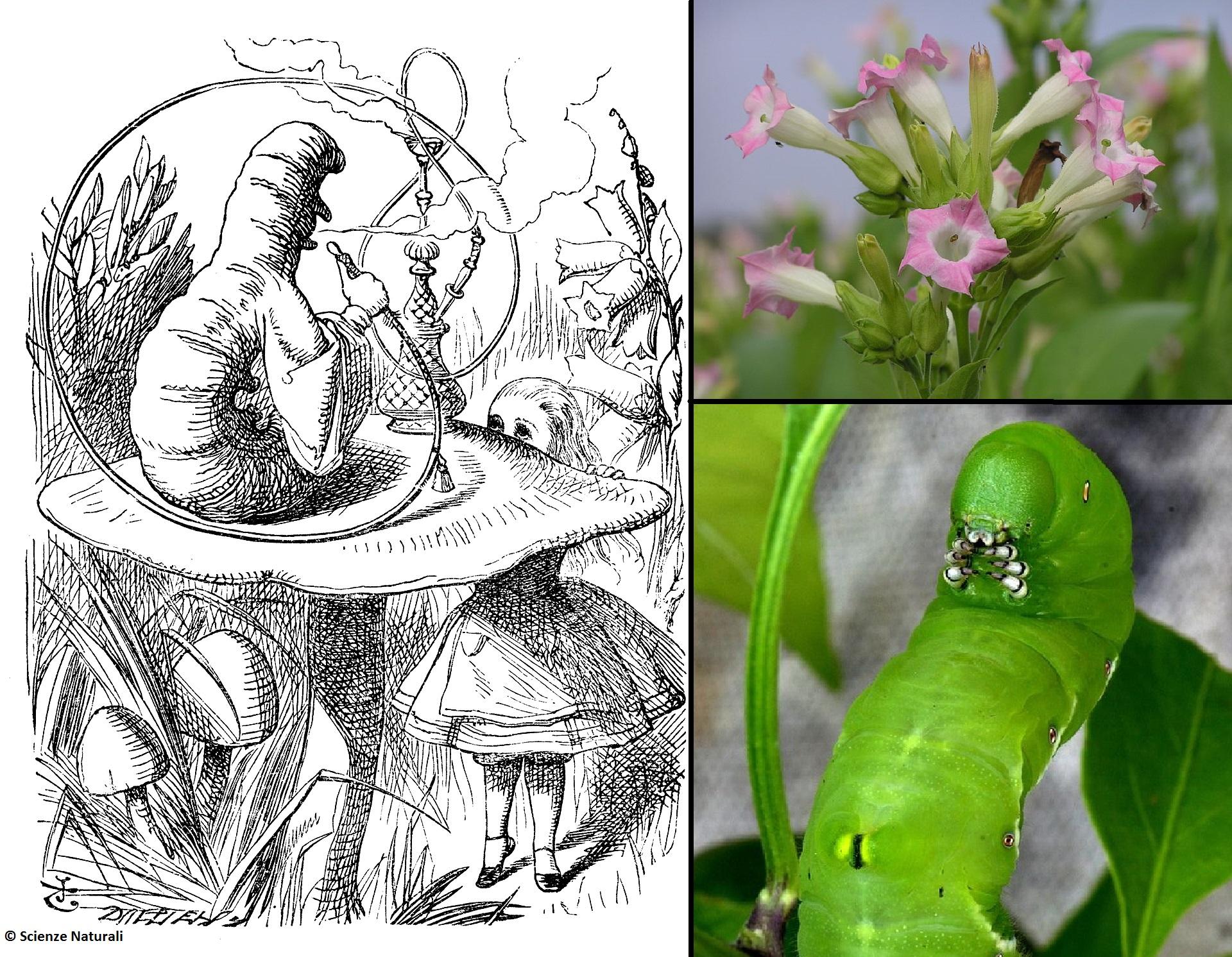 La vera storia del Brucaliffo…perché la Natura può essere più incredibile delle fiabe
